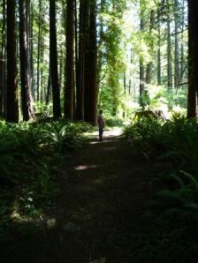 Trestle Loop Trail